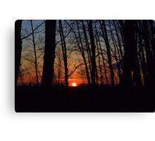 Sunset Trees Canvas Print