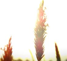 Afternoon Field by gavinimes