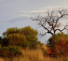 Natures paintbrush,  Northern Territory Style by myraj