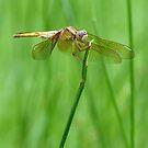 Hiding in the Long Grass by kibishipaul