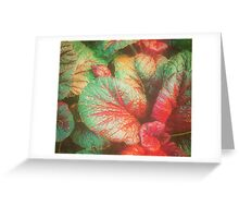 RED GREEN LEAFY PLANT Greeting Card