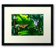 Under the Forest Canopy Framed Print