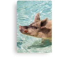 Swimming Pigs of Exuma Cays; Pt.3 Canvas Print