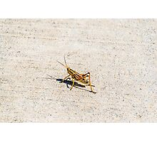 Knee High to a Grasshopper Photographic Print