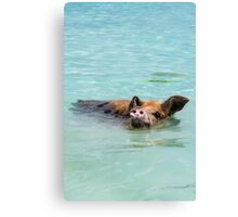 Swimming Pigs of Exuma Cays; Pt.5 Canvas Print