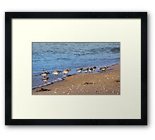 Beachcombers 2 – Sandpipers on the Beach  Framed Print