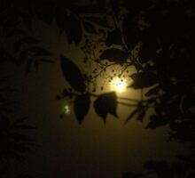 Licht im Dunkelheit, mit Pflanze Sticker