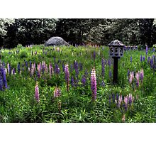 Birdhouse in the Lupine Photographic Print