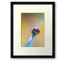 Bumble bee conversation Framed Print