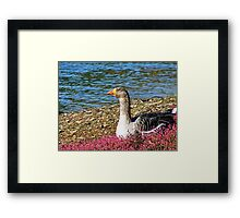 Goose relaxing in the flowers Framed Print