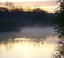 Misty Morning Duck by cabmusic