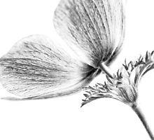 A Flower Of No Color by Caitlyn Grasso