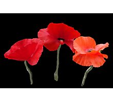 Beautiful red poppy flowers photo art in black background. Photographic Print