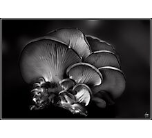 Shelf Fungus Monochrome Photographic Print