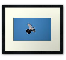 Crested Pigeon Framed Print