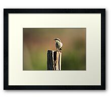 Singing Honeyeater - Kilcowera Station Framed Print