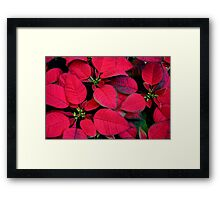 Red Poinsettias For Holiday Cheer Framed Print