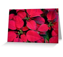 Red Poinsettias For Holiday Cheer Greeting Card