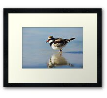 Black Fronted Dotterel - Kilcowera Station Framed Print