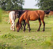 Golden hour horses by Erik Anderson