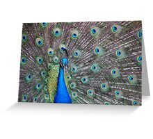 Up Close and Peacock  Greeting Card