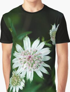 By The Wayside Graphic T-Shirt