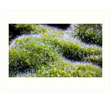 Dew Drops #3 Art Print