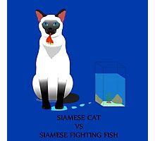 Siamese cat vs Siamese Fighting Fish Photographic Print