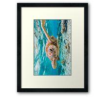 Turtle Smile Framed Print