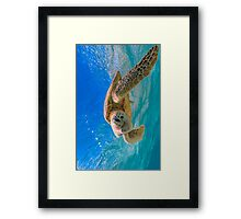 Colourful Turtle  Framed Print