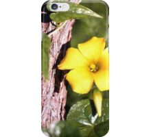 The Bermuda Buttercup in Gibraltar  (Oxalis pes-caprae) iPhone Case/Skin