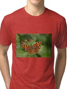 Comma Butterfly at Gwithian Nature Reserve in Cornwall Tri-blend T-Shirt
