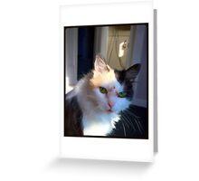 HAPPY CAT Greeting Card