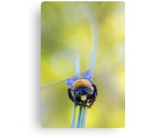 Advice from a bee Canvas Print