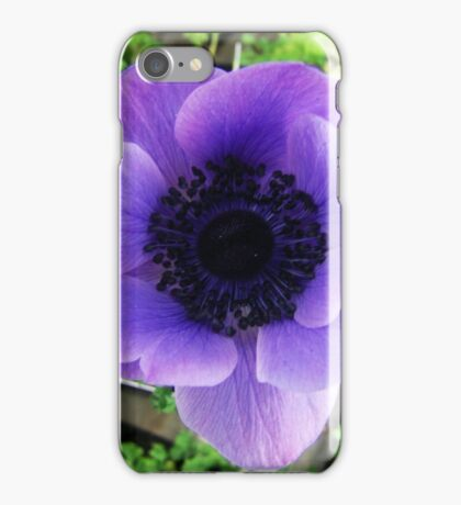 Grecian Windflower iPhone Case/Skin