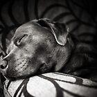 Sleepy Dog by Andy Freer