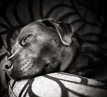 Sleepy Dog by Andy Freer