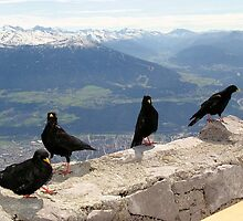 Hungry Birds - Innsbruck by Francis Drake
