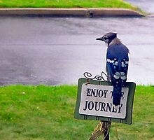 Enjoy the Journey Blue Jay by lifeisgoodphoto