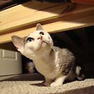 """What the""""H"""" R U doin' up there? by Al Bourassa"""
