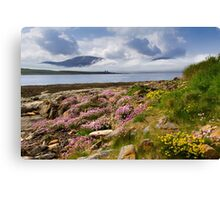 Island of Hoy. Spring Flowers from Ness Point, West Orkney. Scotland. Canvas Print