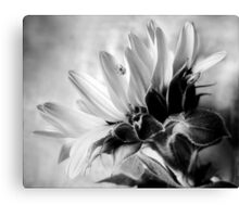 Sunflower with Spider Canvas Print