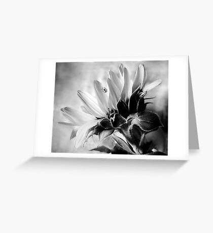 Sunflower with Spider Greeting Card