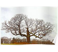 Tree - Outstanding in its Field Poster