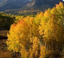 Colorado Fall by Eivor Kuchta
