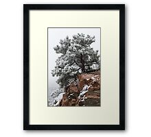Snowy tree on red rock Framed Print