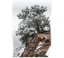 Snowy tree on red rock Poster