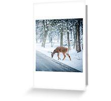 Snow deer s Greeting Card