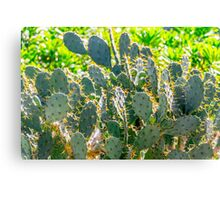 Prickley Canvas Print
