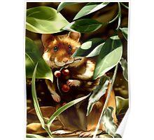 European Hamster under Shadows Poster
